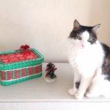 Коробка новогодняя. Фото 2.