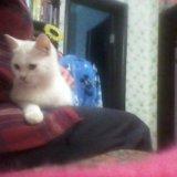 Котёнок. Фото 2. Холмская.