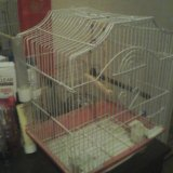 Клетка для папугаев гатов обменять на папугая любо. Фото 2. Санкт-Петербург.