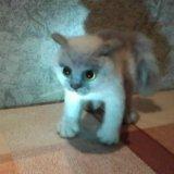 Котик. Фото 1. Новокузнецк.