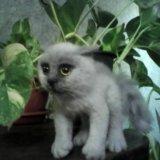 Котик. Фото 2. Новокузнецк.