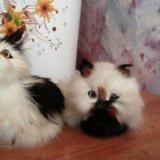 Кошечки. Фото 1.