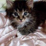Котенок. Фото 1. Можайск.