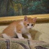 Котенок рыжик .. Фото 1. Рязань.