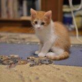 Котенок рыжик .. Фото 2. Рязань.