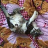 Котёнок. Фото 1. Рязань.