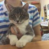 Котёнок. Фото 2. Рязань.