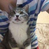 Котёнок. Фото 3. Рязань.