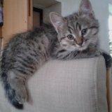 Котята домашние. Фото 3. Батайск.