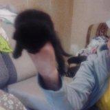 Котята. Фото 2. Зеленоград.