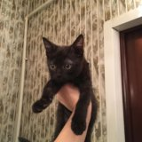 Котята в добрые руки. Фото 1. Черкизово.