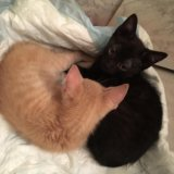 Котята в добрые руки. Фото 3. Черкизово.