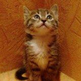 Отдам котёнка в добрые руки!. Фото 2. Москва.