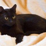 Черная красавица лоян. Фото 3. Тюмень.