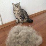 Furminator для животных. Фото 1.