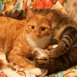 Кот рыжик. Фото 2. Томск.