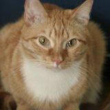 Кот рыжик. Фото 3. Томск.