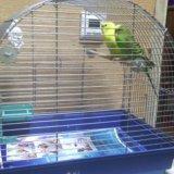 Два волнистых попугая вместе с клеткой. Фото 1. Хабаровск.