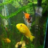 Рыбки. Фото 1.