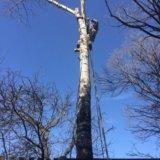 Спил деревьев, спилить дерево. Фото 2. Великий Новгород.