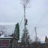 Спил деревьев, спилить дерево. Фото 3. Великий Новгород.