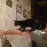 Маленький черный котенок ищет любящую семью.. Фото 3.