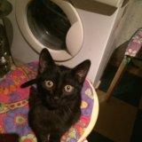 Маленький черный котенок ищет любящую семью.. Фото 2.