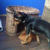 Домик для собаки (мини-пород). Фото 2. Красноуральск.
