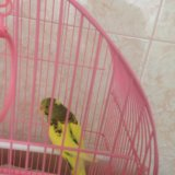 Попугай. Фото 3.