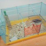 Сатиновые мышки. Фото 1. Аксай.