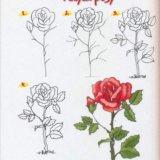 Новый большой учебник по рисованию для детей. Фото 2. Москва.