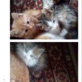 Отдам котят и кошек. Фото 1. Астрахань.