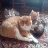 Отдам котят и кошек. Фото 4. Астрахань.