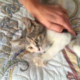 Кошечка в добрые руки. Фото 3. Можайск.
