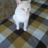Кот. Фото 3. Ревда.