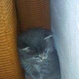 Котята бесплатно. Фото 2.