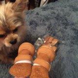 Обувь для собаки. Фото 3.