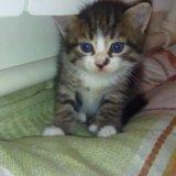 Котята бесплатно. Фото 3.