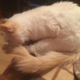 Котёнок. Фото 4.