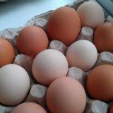 Домашние куриные яйца!. Фото 1. Москва.