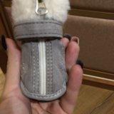 Сапожки для собачки мелкой породы. Фото 3. Новый Уренгой.