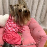 Одежда для собак.. Фото 4. Калининград.
