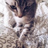 Котенок 2 месяца девочка. Фото 1.