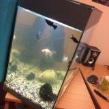 Аквариум с рыбками. Фото 1.