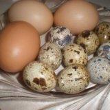 Яйцо домашние куриное перепелиное. Фото 1.