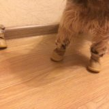 Сапожки для собак. Фото 3. Тула.