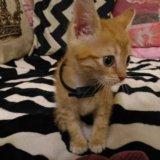 Отдадим котенка милого, пушистого). Фото 1.
