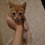 Отдадим котенка милого, пушистого). Фото 3.