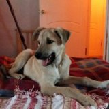 Чудесный щенок в добрые руки. Фото 1. Москва.
