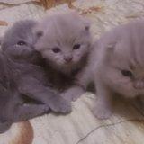 Плюшевые котятоньки. Фото 3.